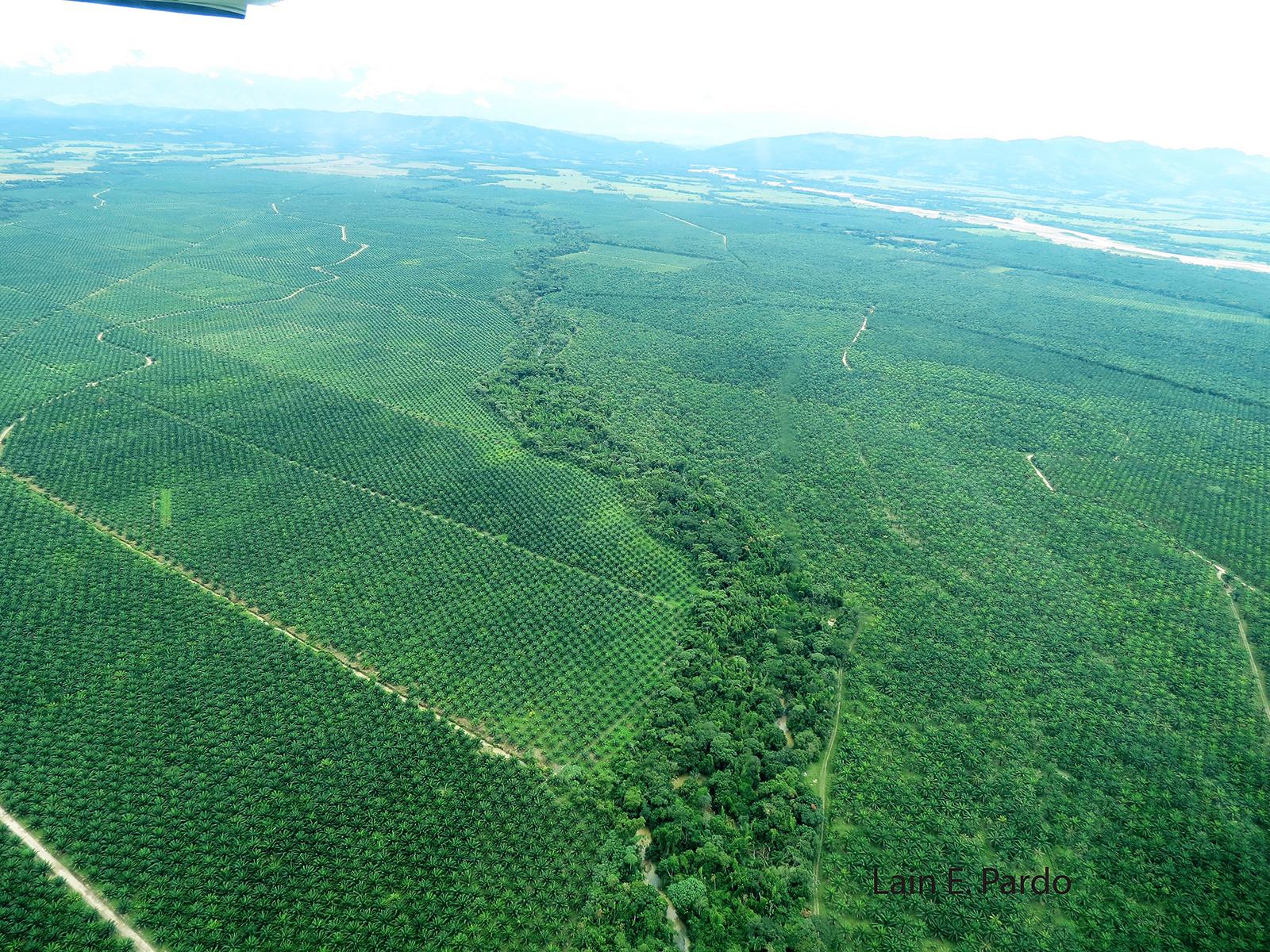plantation_aerial_1600W1200H